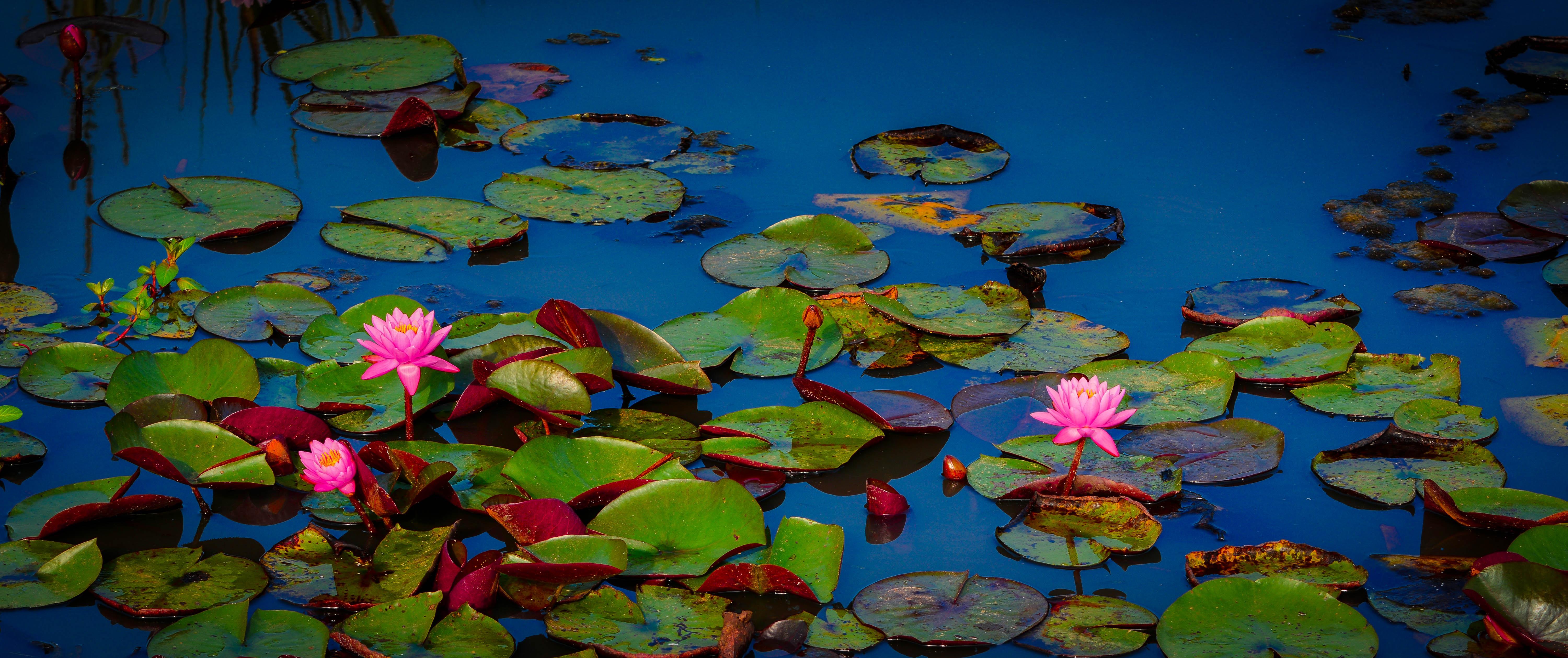 A local hidden treasure NPS Kenilworth Park Aquatic Gardens
