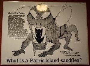 Parris Island sandfleas
